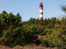 Amrumer Leuchtturm vor der Heide
