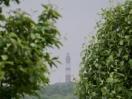 Amrumer Leuchtturm im Nebel 2
