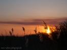 Sonnenuntergang hinter Reet