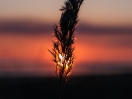 Sonnenuntergang - Details